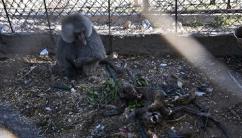 이·하마스 전쟁에 동물도 불똥